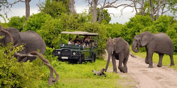 Charity Auction Items - VIP Experiences & Vacation Packages -South African Safari